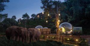 В Таиланде открыли отель, в котором можно спать со слонами