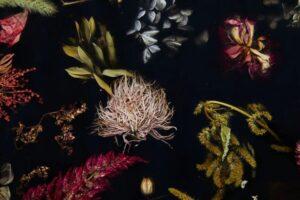 Flora Cabinet от Марцина Русака: сохраненная мимолетная красота цветов